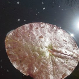The 10th leaf, the 1st in the organic pond