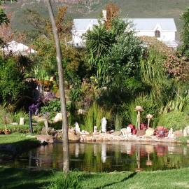 Organic Pond After