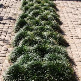 Greening the driveway.